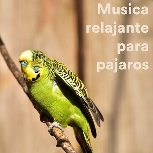 The Rabbit Relaxer - Rabbit Spa Music