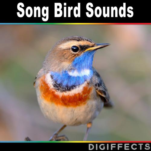 Digiffects Sound Effects Library - Nightingale in Forest Environment  (2016)